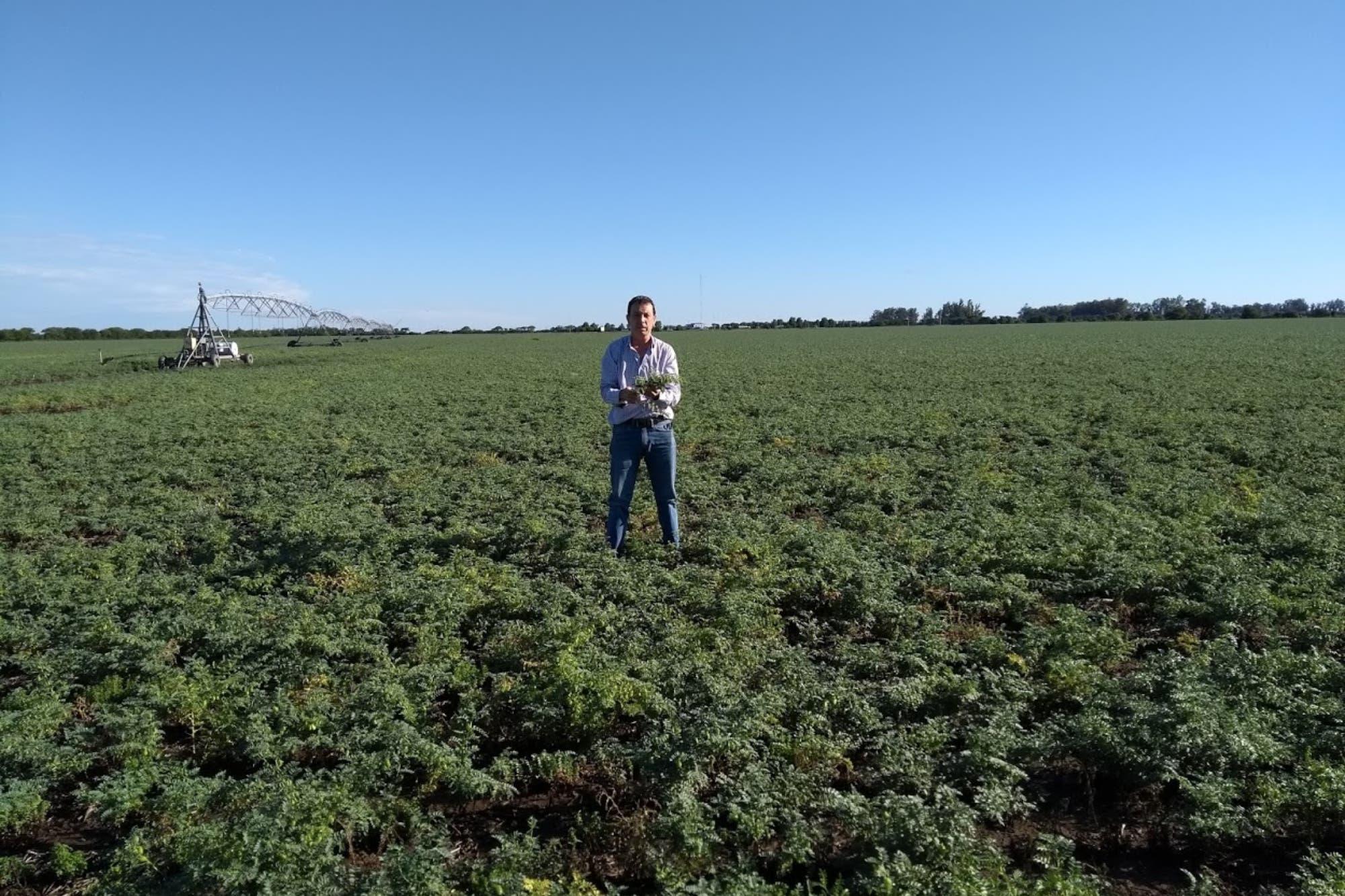 El productor cordobés que apuesta a la cogeneración de datos para una agricultura más eficiente