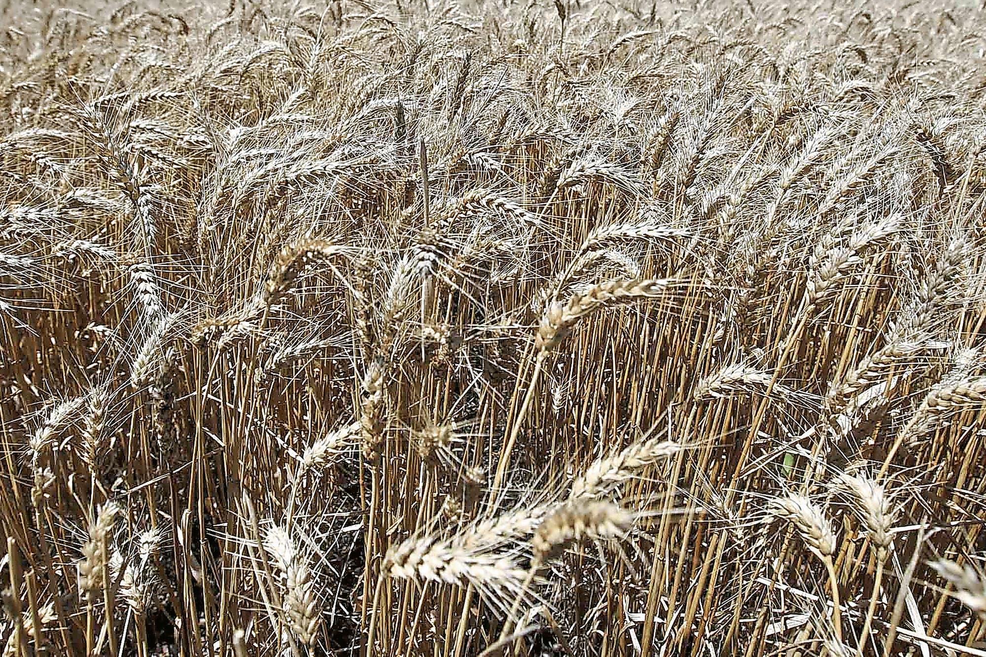En granos, el cobro rápido es tendencia