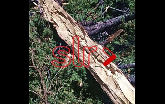 Naschel: Cayó un rayo y destruyó dos árboles