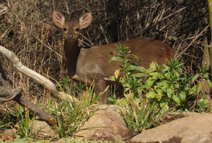 Recomendaciones ante la presencia de animales silvestres a la orilla de la ruta o zonas urbanas