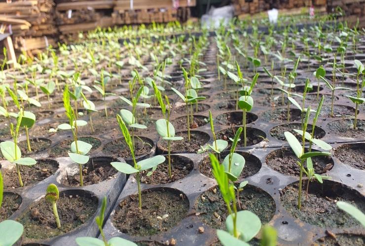 la-red-de-viveros-alcanzo-una-produccion-de-50-mil-ejemplares-y-crece-sin-pausas