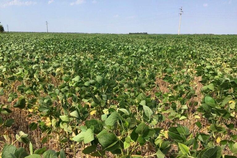 mercado-de-granos:-leves-subas-para-la-soja-y-el-maiz-en-chicago