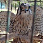 centro-de-conservacion-de-vida-silvestre:-en-el-ultimo-mes-ingresaron-57-animales-rescatados