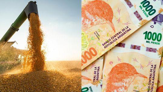 una-firma-propone-ingresar-al-mercado-de-granos-con-un-ticket-minimo-de-$20.000